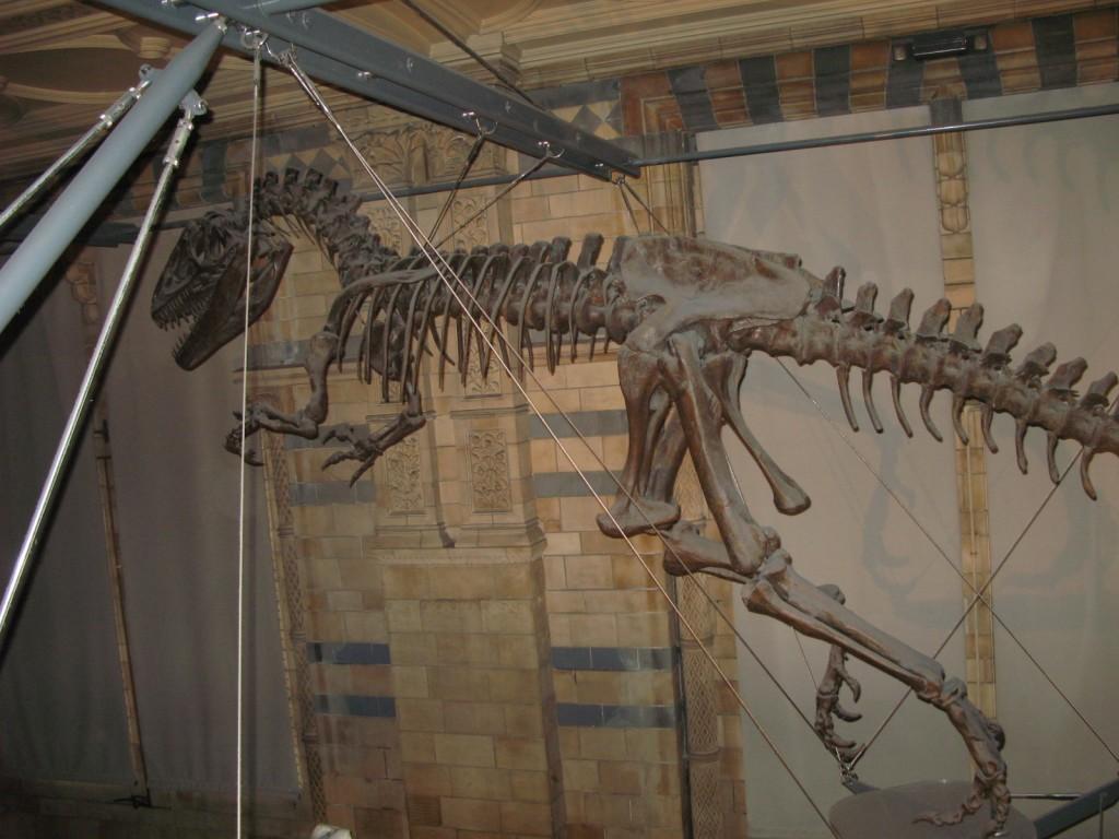 Museu de História Natural, Londres - Dezembro de 2012